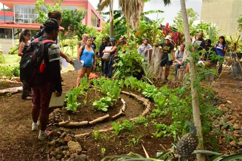 Uh Hilo Students Practice Sustainable Agriculture In Vegetable Gardening In Hawaii