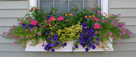 flowers for window boxes in partial shade shapes and forms of flowers for window boxes