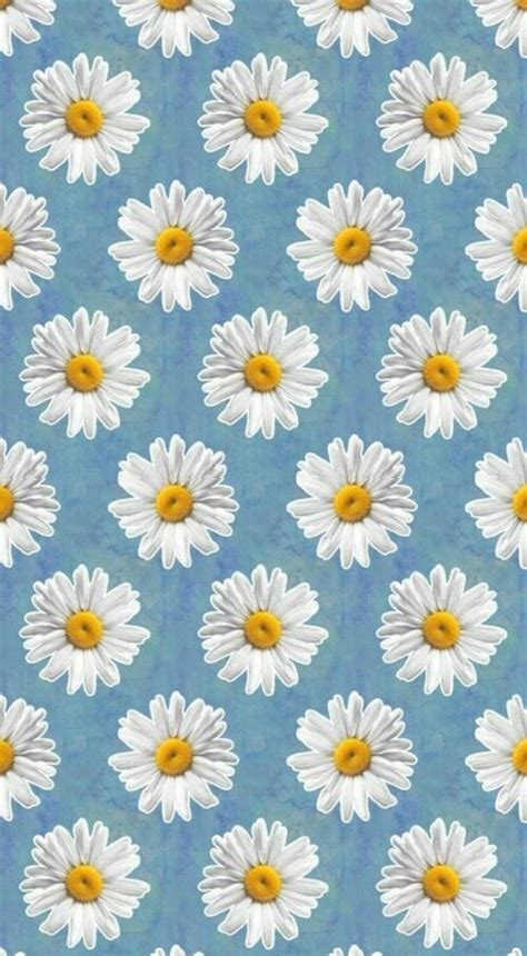 daisy wallpaper pinterest daisy wallpaper wallpaper background wallpaper