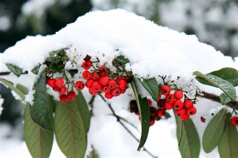 bilder gartendeko winter tipps f 252 r die gartendeko im winter gabiona gabionen
