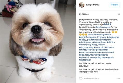 puppy hashtags 9 surefire ways to make your beloved pet an instagram