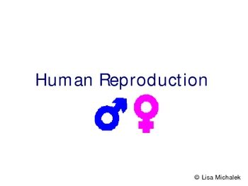 logo design lesson powerpoint human reproduction and development powerpoint presentation
