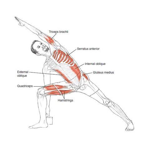yoga anatomy leslie kaminoff amy matthews 0783324853148 - 1450400248 Yoga Anatomy