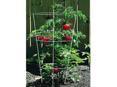 tomato plant supports    support tomato