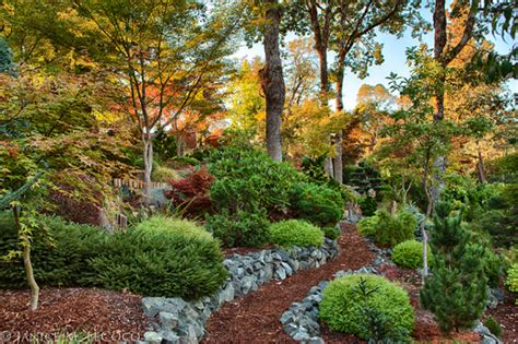 Landscape Design Pine Trees Evergreens Form And Foliage