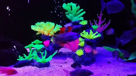 aquaholics glow aquarium fish tank coral ornament