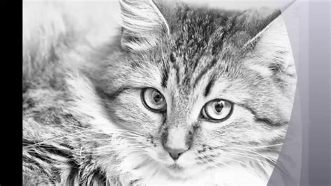 pets grayscale photo coloring book for adults
