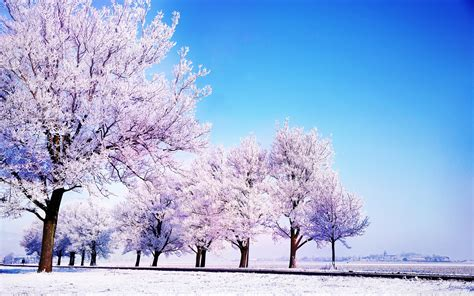 winter images winter backgrounds wallpaper 2560x1600 51266