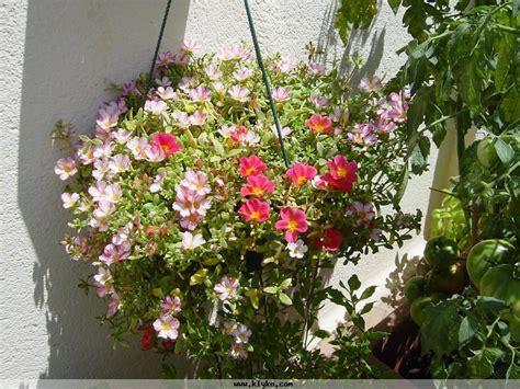 Plantes D Extérieur Fleuries by Plante Grasse Fleurie D Ext 233 Rieur Images