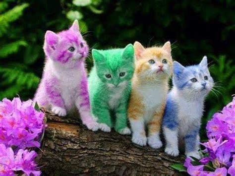 imagenes chistosos de gatos 200 imagenes de gatos divertidos y graciosos gatitos muy