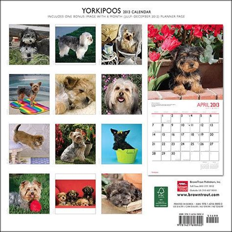 yorkie poo calendar 79 best images about yorkie poo on yorkie and