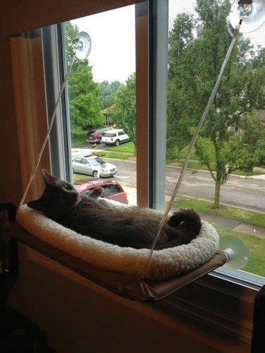 window mounted cat bed window mounted cat bed quot as seen on tv quot tvs we and cats