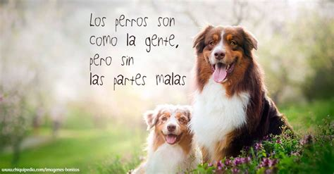 imagenes muy bonitas y graciosas im 225 genes de perros muy bonitas y graciosas 161 no te las
