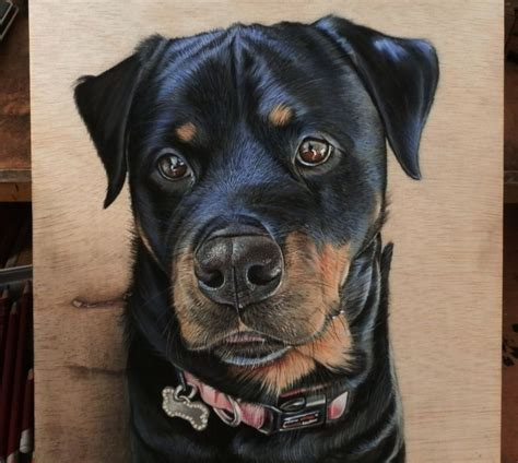 rottweiler drawings harley quinn rottweiler drawing by ivanhooart on deviantart