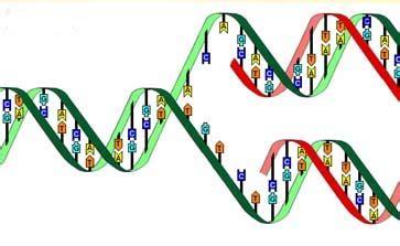 humanos con 3 cadenas de adn enzimas que modican el adn