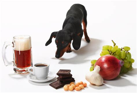 what foods are toxic to dogs these human foods are toxic to your