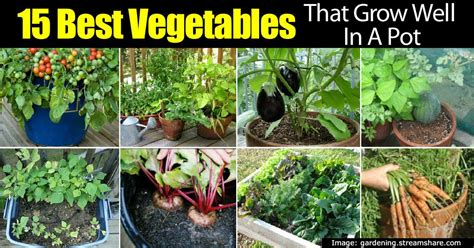 Balcony Patio 15 top vegetables that grow well in a container or pot