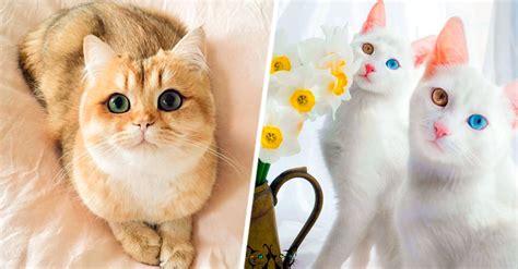 imagenes gatitos hermosos 19 gatos m 225 s bellos de todo el mundo