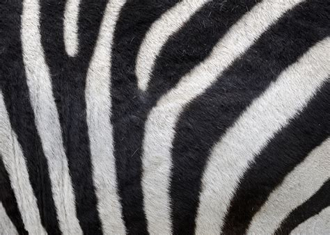 animal pattern photography glenn nagel photography animal patterns
