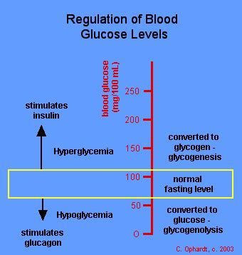 carbohydrates hormones carbohydrate hormone