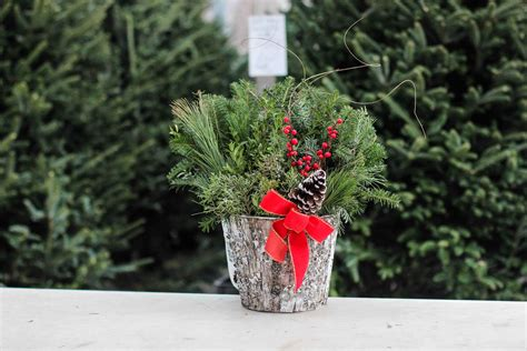 28 best wrentham christmas trees large decorated cedar