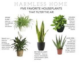 best indoor plants for oxygen survive asia urban survival in asia