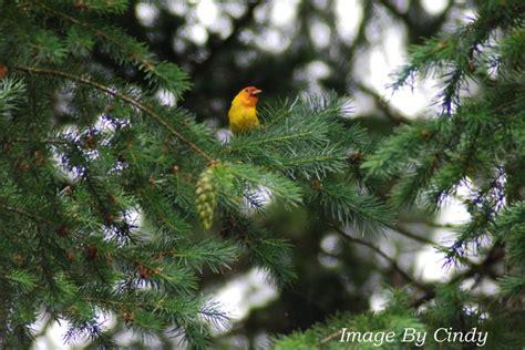 pacific northwest birds fic inspiration something rich