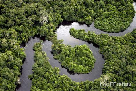 amazon forest bei 223 en gedanken amazon rainforest