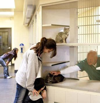 denver pound animal arts gt animal shelters gt denver animal shelter