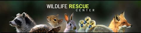 wildlife rescue center