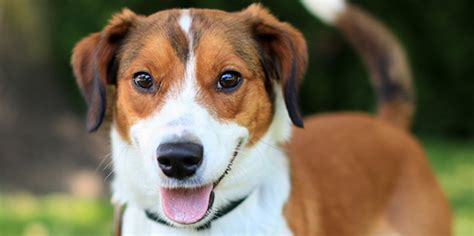 humane society dogs for adoption image gallery humane society adoptions