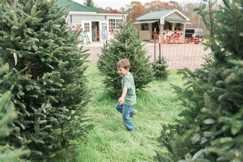 cut your own christmas tree westminster md cut your own tree farms around lake wylie sc nc