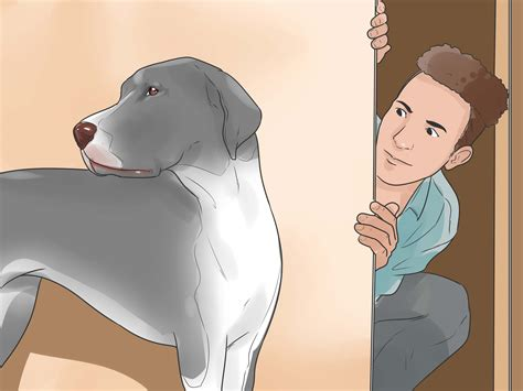 how to exercise a puppy how to exercise a lazy 7 steps with pictures wikihow