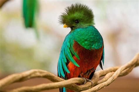 quetzal fotos de pictures to pin on pinterest tattooskid