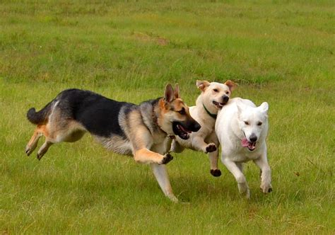 dogs at play 19 happy dogs who are the best day smiling