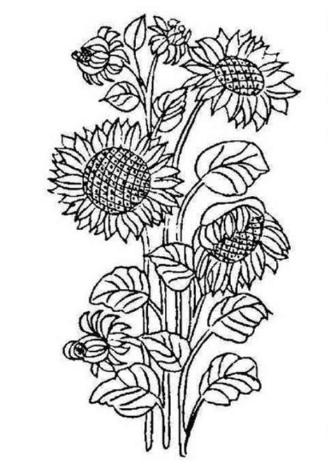 sunflower garden coloring page sunflower coloring page printables pinterest