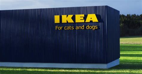 ikea dogs ikea just launched a pet furniture collection and animal