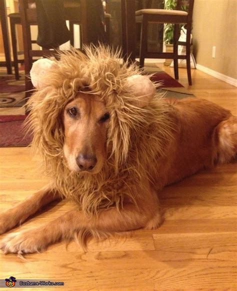 tessa  lion costume  dogs coolest diy costumes
