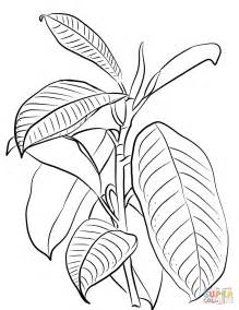 Rubber Tree Coloring Page | indian rubber tree ficus elastica coloring page free