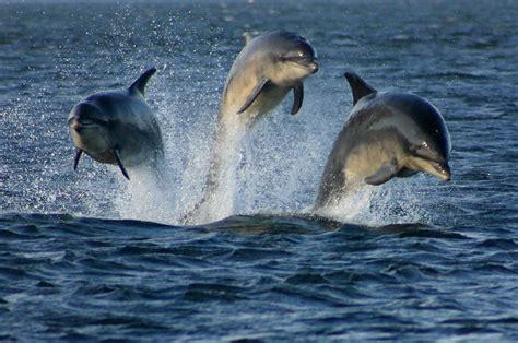 cafechoo image all sea mammals