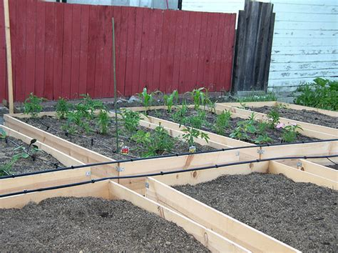 drip irrigation for raised beds raised beds drip irrigation this is what it was like in