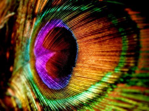 peacock feather colors peacock feather color inspiration