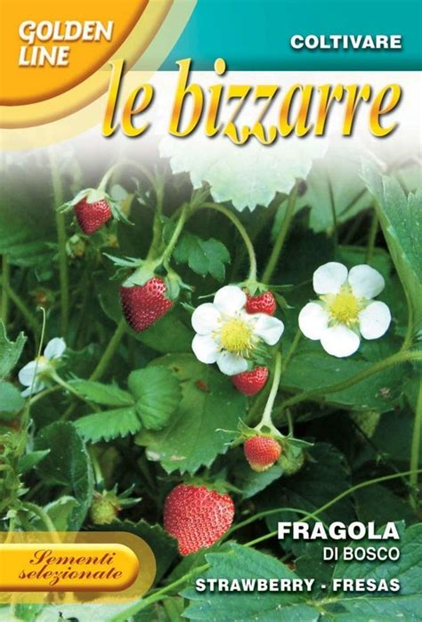 test di bosco strawberry woodland fragola di bosco 63 3 seeds from italy