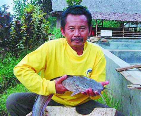 Bibit Lele Sangkuriang Bogor mengenal abah nasrudin bapaknya lele sangkuriang