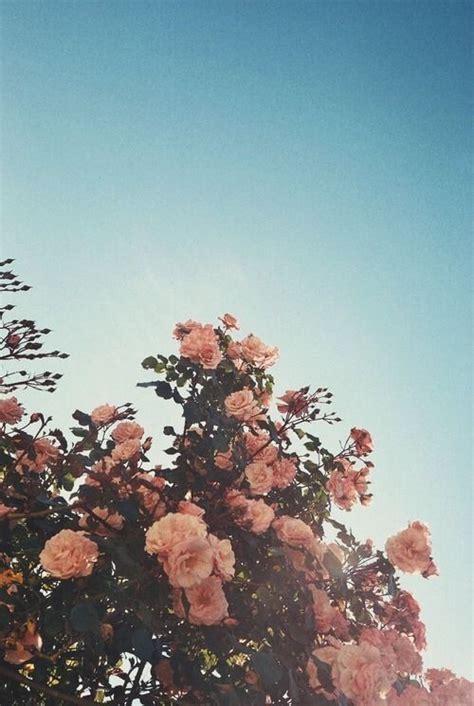abbies aesthetic flower wallpaper flower aesthetic