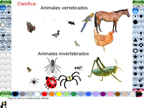 imagenes de animales vertebrados e invertebrados imagenes de invertebrados y vertebrados imagui