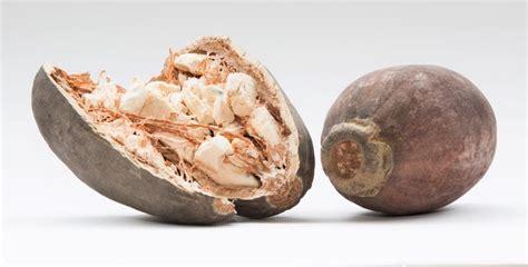 baobab fruit baobab seed is nutritional benefits of baobab powder rejuva nutrition
