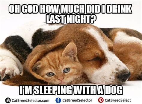 Funny Dog And Cat Memes - cat memes cat breed selector