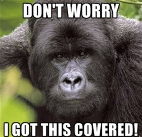 Gorilla Meme - cars to adopt scratch resistant gorilla glass soon