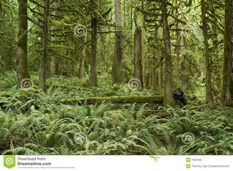 Bc Floor Plans pacific northwest forest stock photo image 7932190